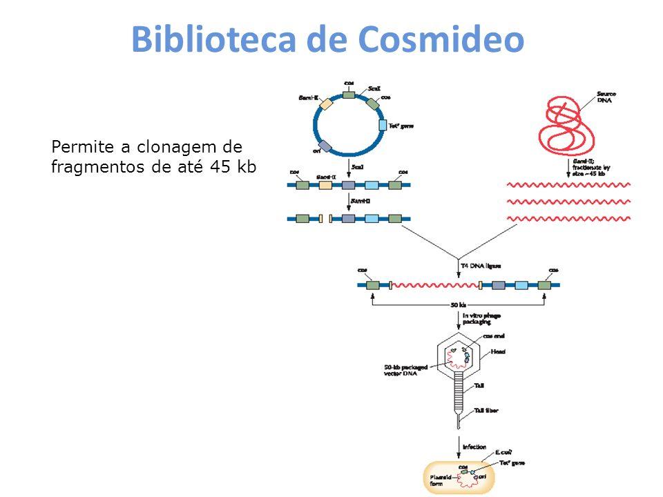 Biblioteca de Cosmideo
