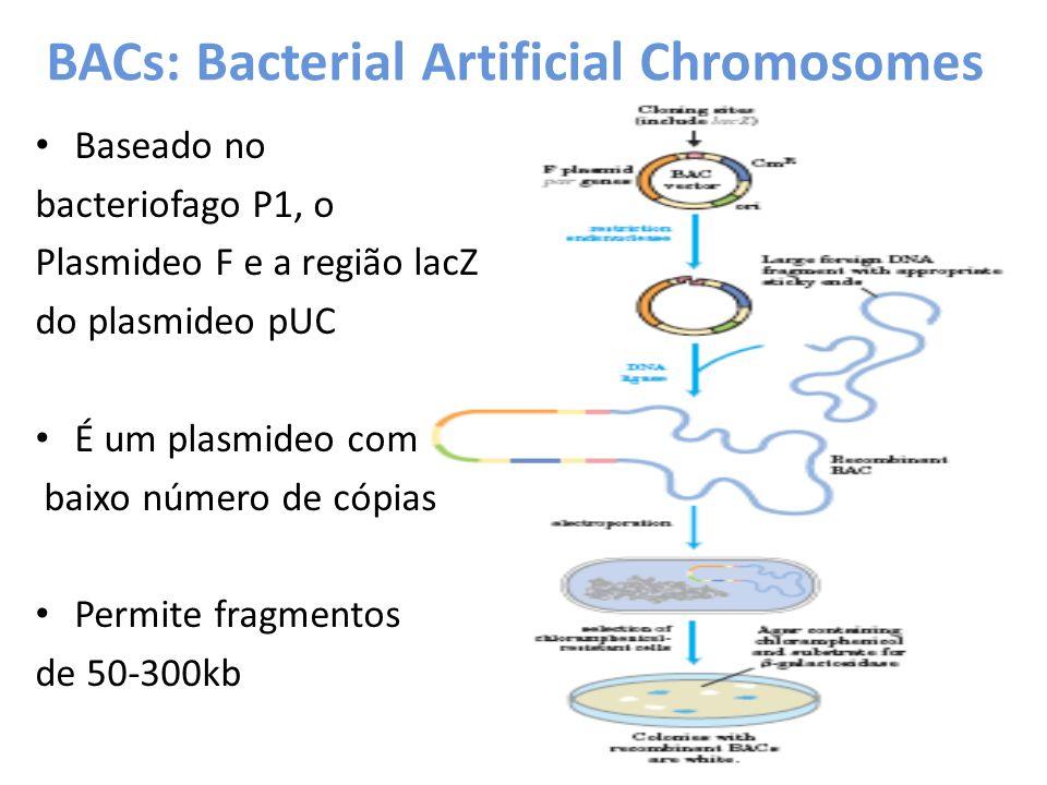 BACs: Bacterial Artificial Chromosomes