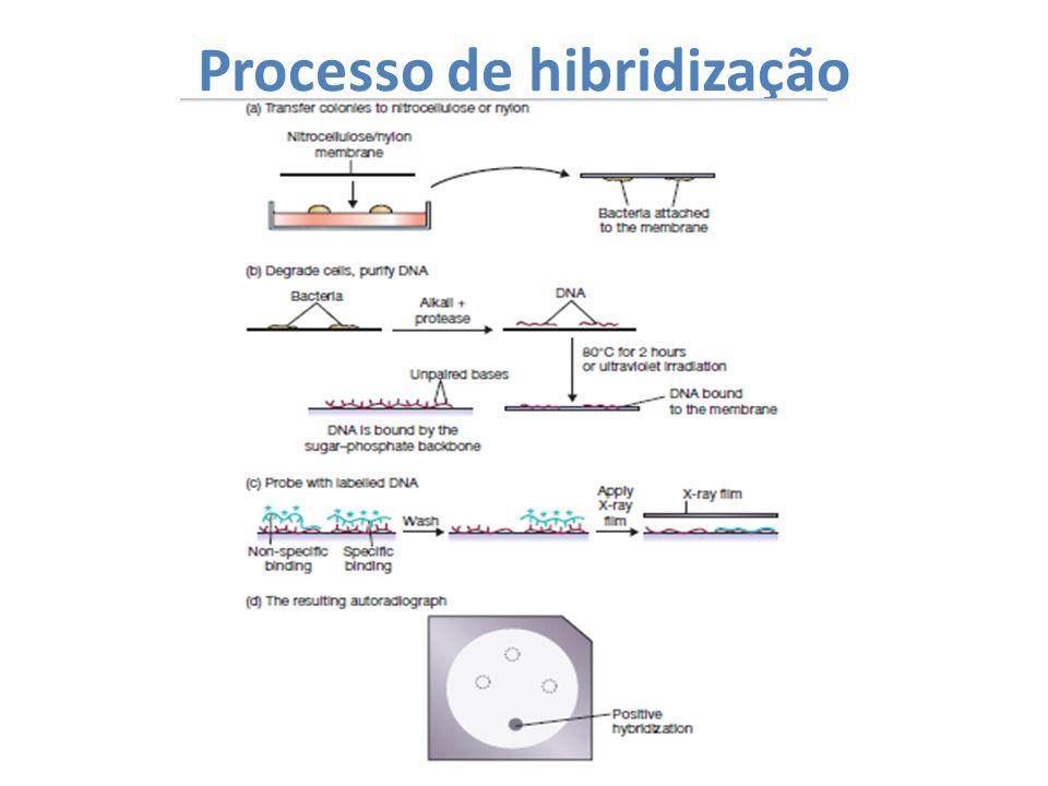 Processo de hibridização