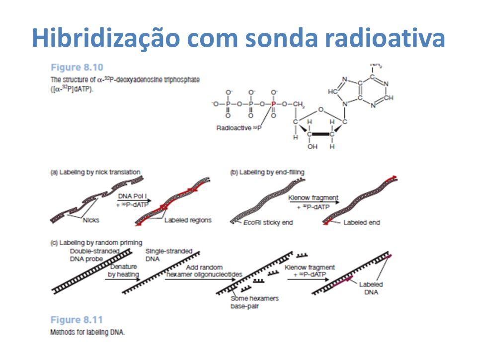 Hibridização com sonda radioativa