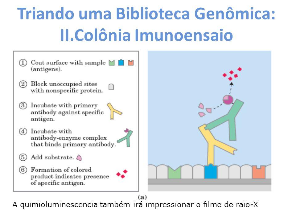Triando uma Biblioteca Genômica: II.Colônia Imunoensaio