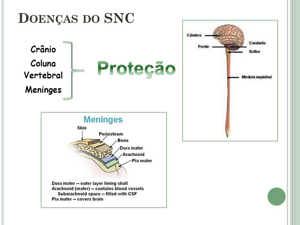 Doenças do SNC Crânio Proteção Coluna Vertebral Meninges