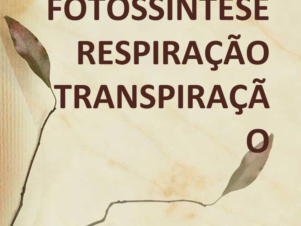 FOTOSSÍNTESE RESPIRAÇÃO TRANSPIRAÇÃO