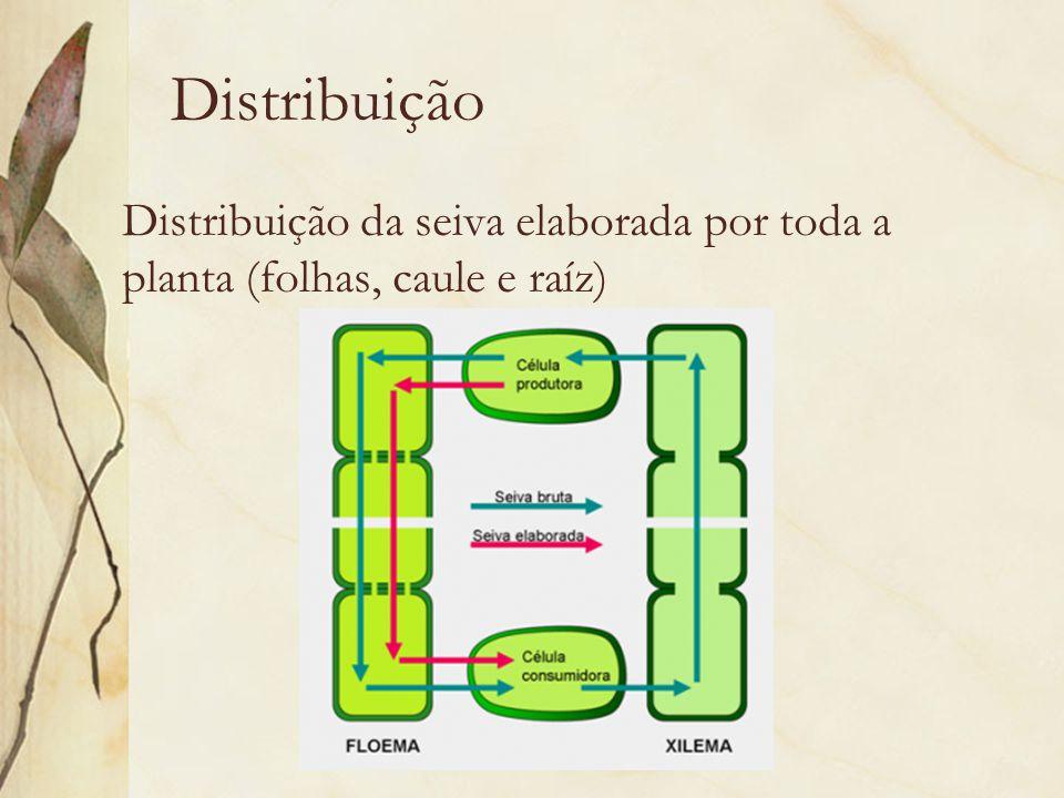 Distribuição Distribuição da seiva elaborada por toda a planta (folhas, caule e raíz)