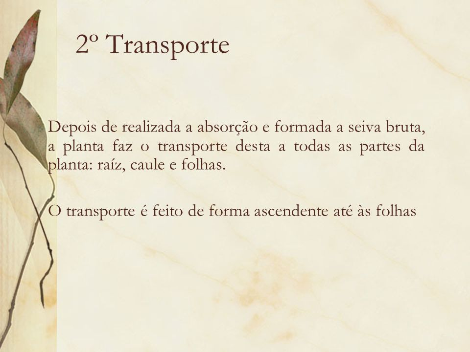 2º Transporte