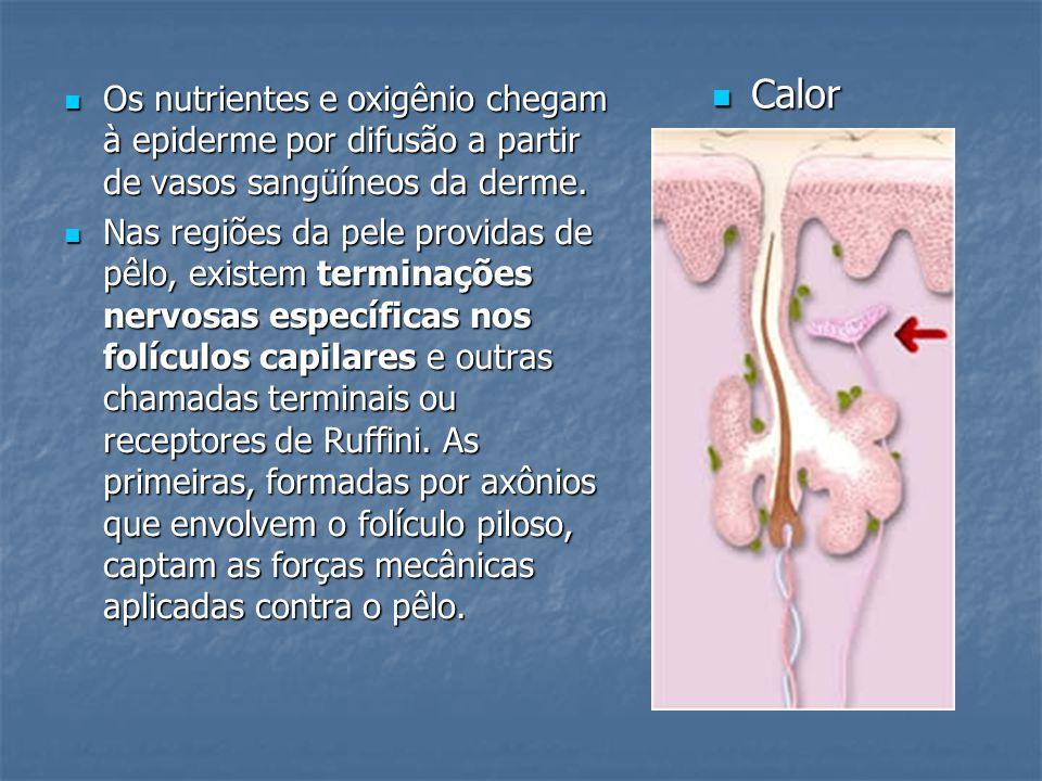 Calor Os nutrientes e oxigênio chegam à epiderme por difusão a partir de vasos sangüíneos da derme.