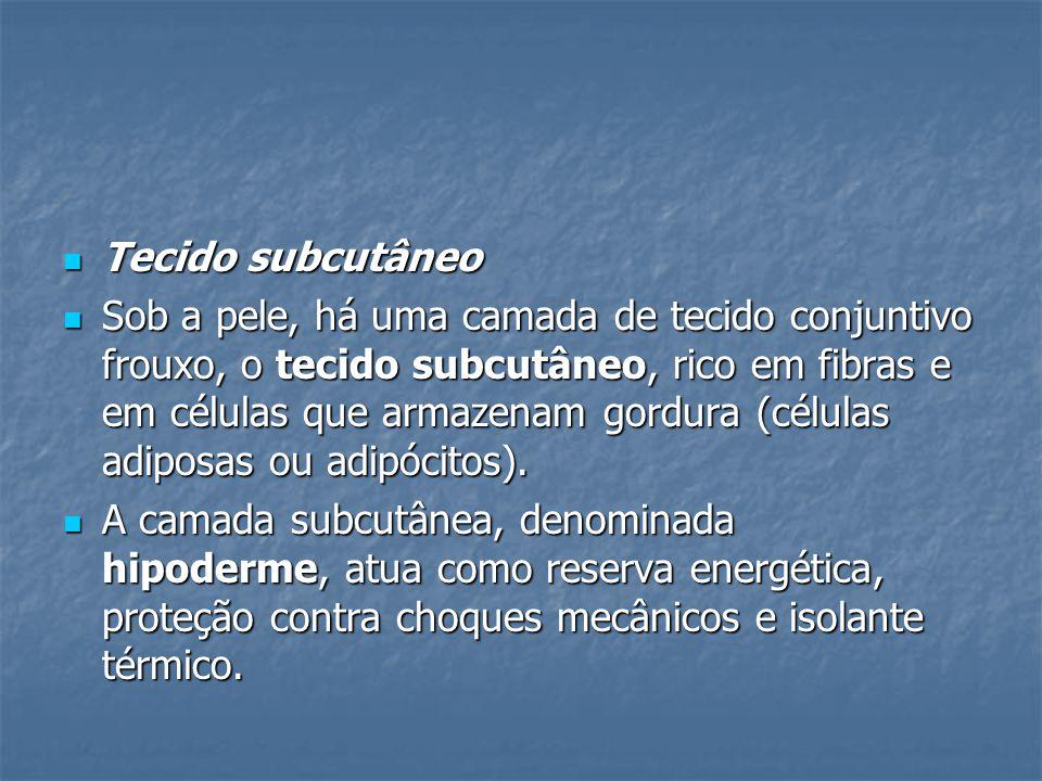 Tecido subcutâneo