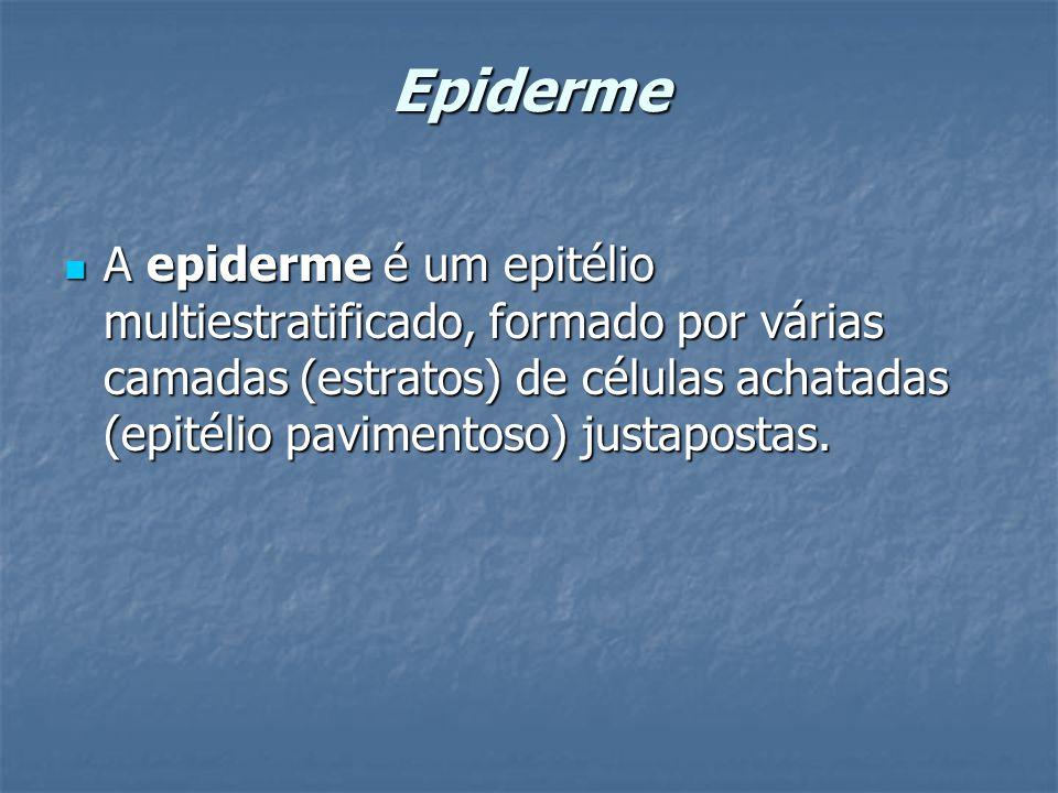 Epiderme A epiderme é um epitélio multiestratificado, formado por várias camadas (estratos) de células achatadas (epitélio pavimentoso) justapostas.