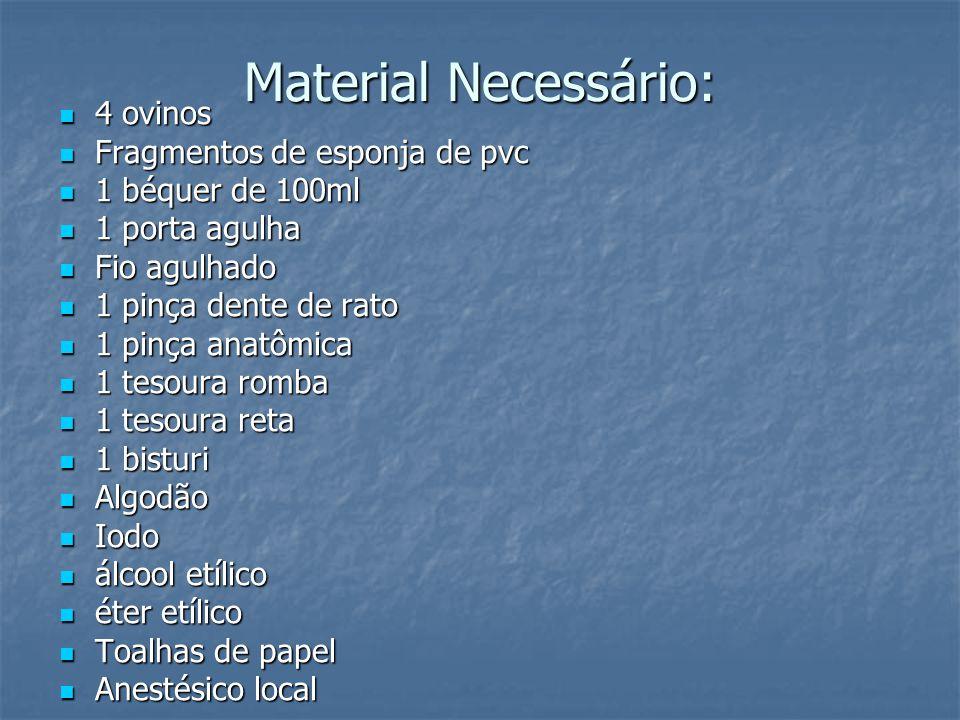 Material Necessário: 4 ovinos Fragmentos de esponja de pvc