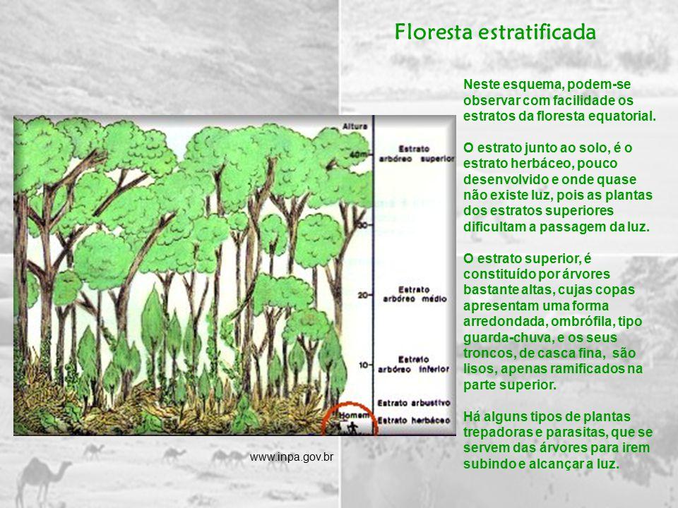 Floresta estratificada