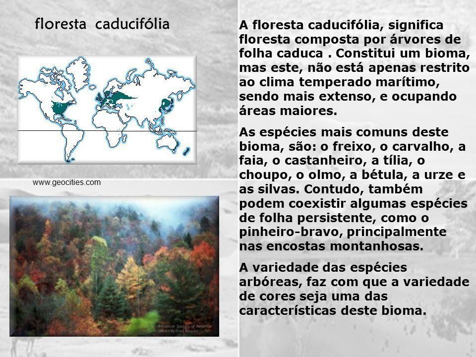 floresta caducifólia
