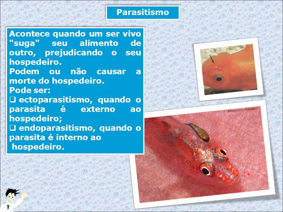 Parasitismo Acontece quando um ser vivo suga seu alimento de outro, prejudicando o seu hospedeiro.