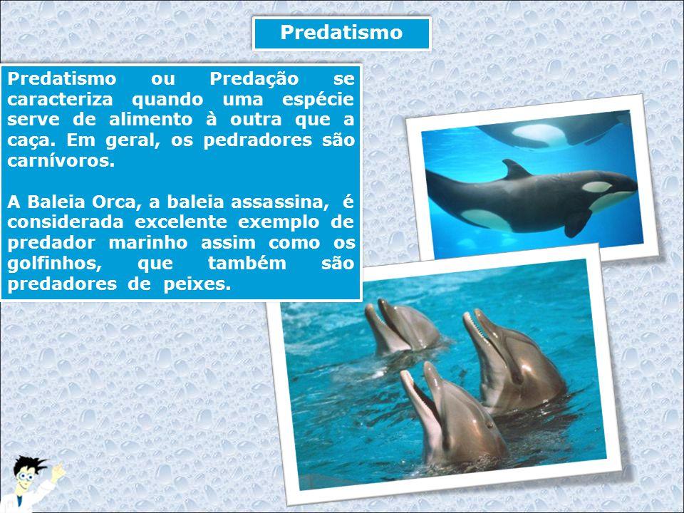 Predatismo Predatismo ou Predação se caracteriza quando uma espécie serve de alimento à outra que a caça. Em geral, os pedradores são carnívoros.