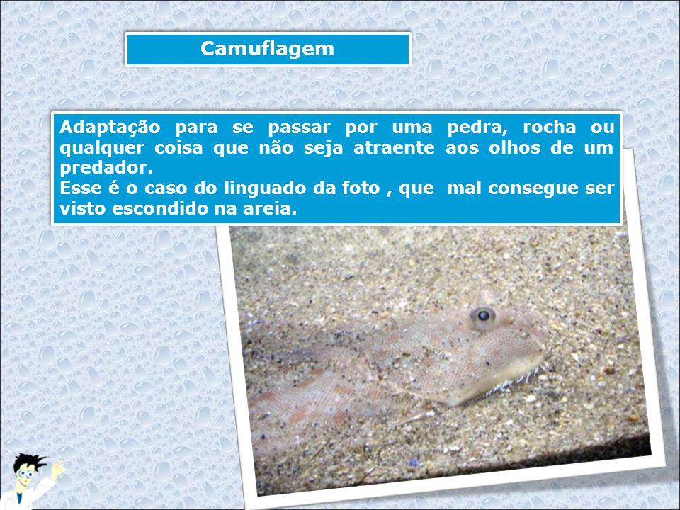 Camuflagem Adaptação para se passar por uma pedra, rocha ou qualquer coisa que não seja atraente aos olhos de um predador.