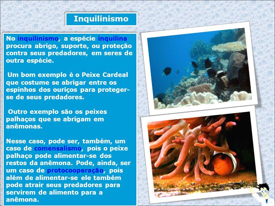 Inquilinismo No inquilinismo, a espécie inquilina procura abrigo, suporte, ou proteção contra seus predadores, em seres de outra espécie.