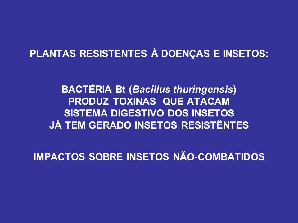 PLANTAS RESISTENTES À DOENÇAS E INSETOS: BACTÉRIA Bt (Bacillus thuringensis) PRODUZ TOXINAS QUE ATACAM SISTEMA DIGESTIVO DOS INSETOS JÁ TEM GERADO INSETOS RESISTÊNTES IMPACTOS SOBRE INSETOS NÃO-COMBATIDOS