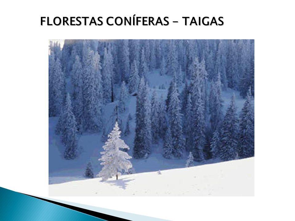 FLORESTAS CONÍFERAS - TAIGAS