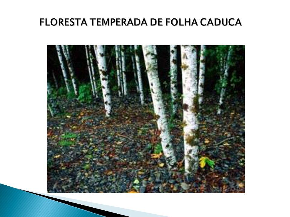 Floresta temperada de folha caduca