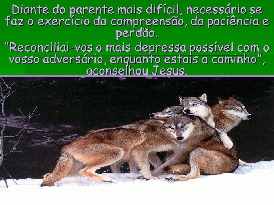 Diante do parente mais difícil, necessário se faz o exercício da compreensão, da paciência e perdão.