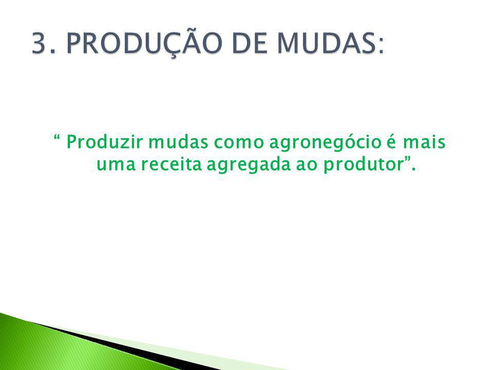 3. PRODUÇÃO DE MUDAS: Produzir mudas como agronegócio é mais uma receita agregada ao produtor .
