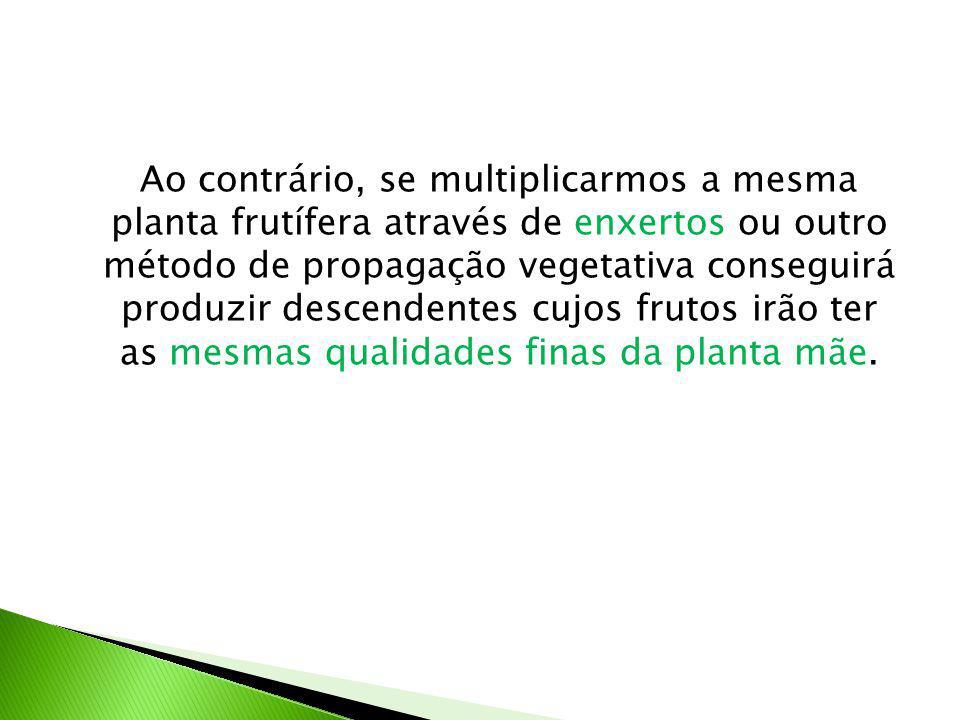 Ao contrário, se multiplicarmos a mesma planta frutífera através de enxertos ou outro método de propagação vegetativa conseguirá produzir descendentes cujos frutos irão ter as mesmas qualidades finas da planta mãe.