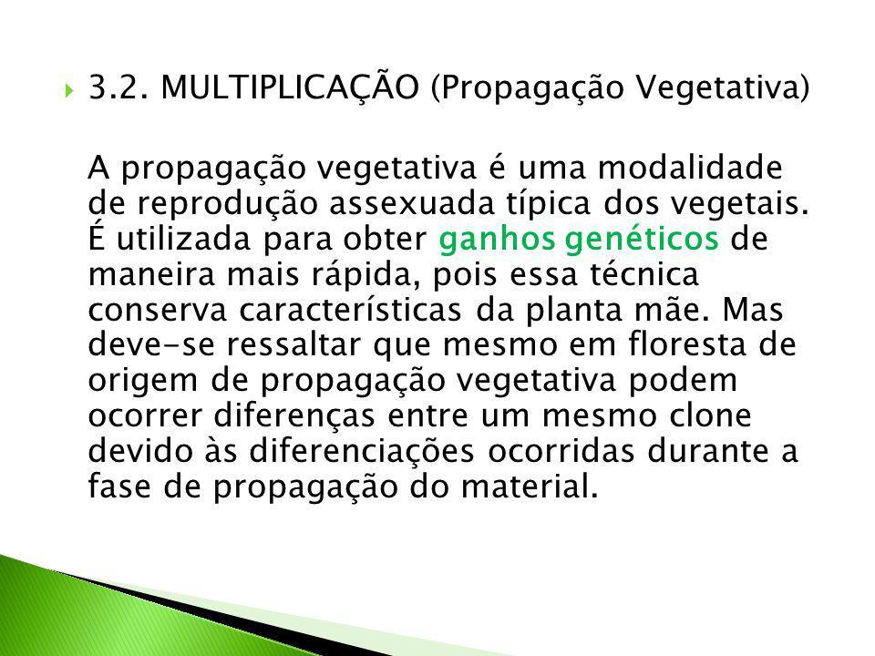 3.2. MULTIPLICAÇÃO (Propagação Vegetativa)