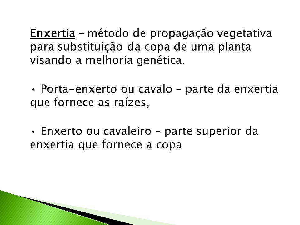 Enxertia – método de propagação vegetativa para substituição da copa de uma planta visando a melhoria genética.