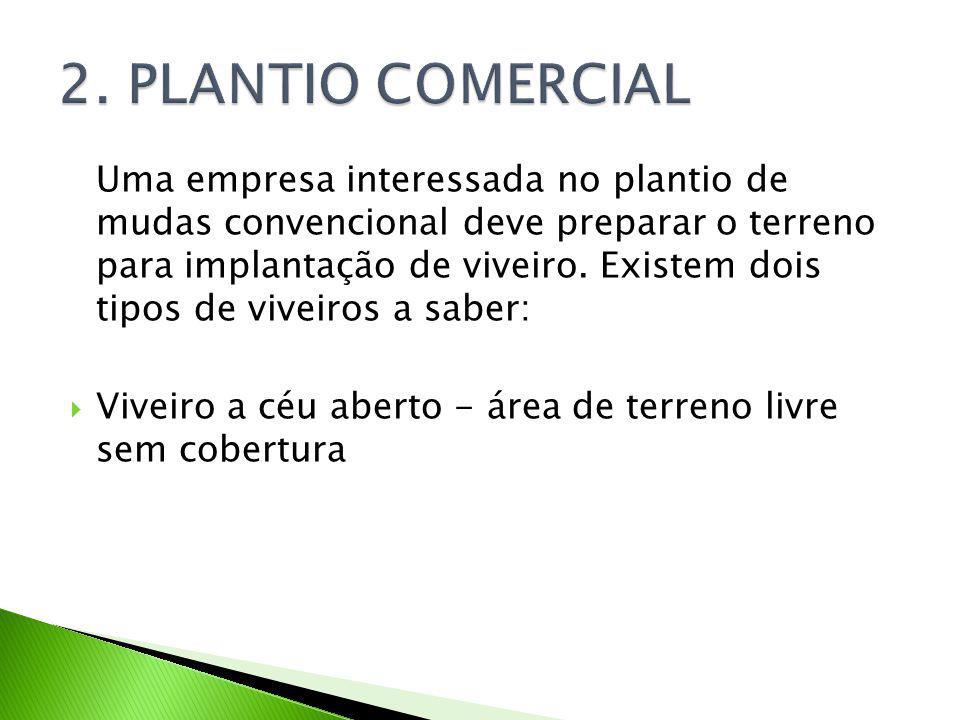 2. PLANTIO COMERCIAL