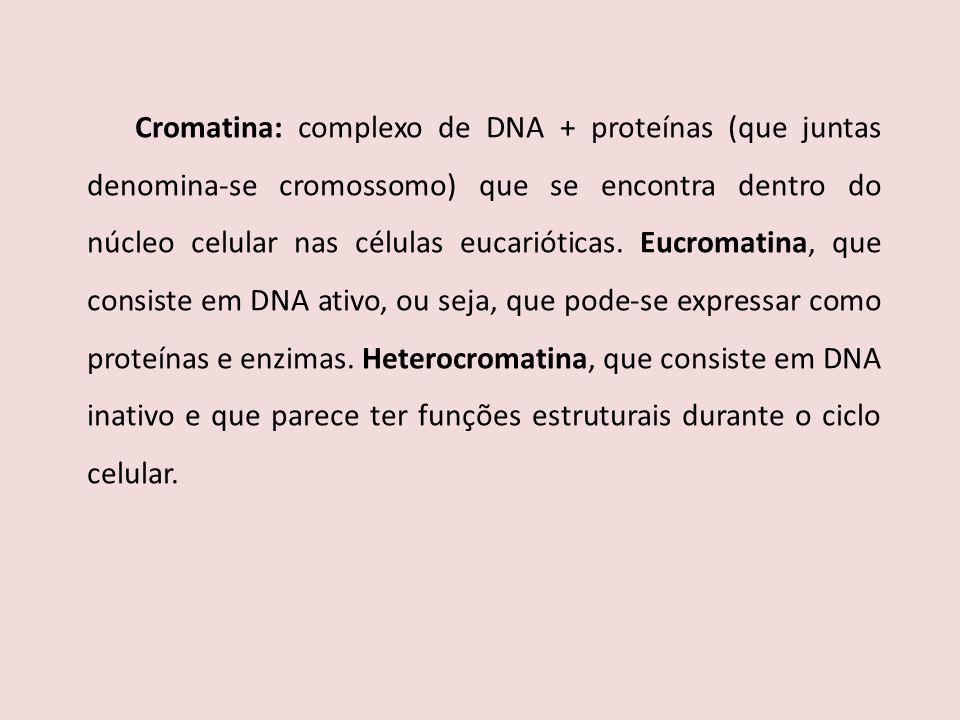 Cromatina: complexo de DNA + proteínas (que juntas denomina-se cromossomo) que se encontra dentro do núcleo celular nas células eucarióticas.
