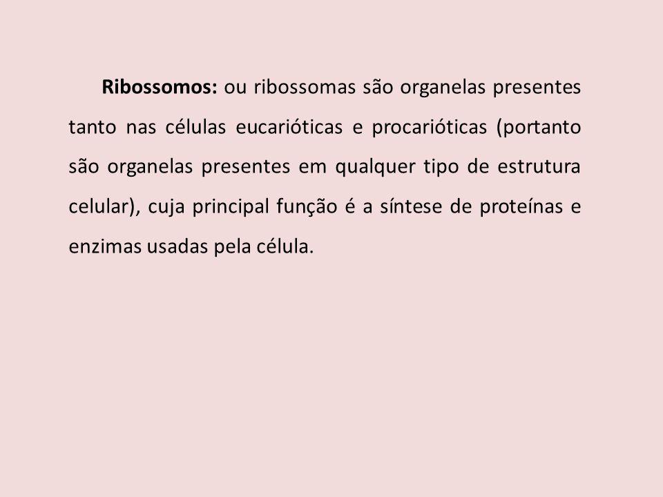 Ribossomos: ou ribossomas são organelas presentes tanto nas células eucarióticas e procarióticas (portanto são organelas presentes em qualquer tipo de estrutura celular), cuja principal função é a síntese de proteínas e enzimas usadas pela célula.