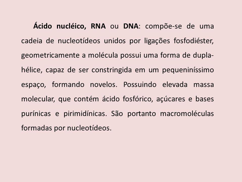 Ácido nucléico, RNA ou DNA: compõe-se de uma cadeia de nucleotídeos unidos por ligações fosfodiéster, geometricamente a molécula possui uma forma de dupla-hélice, capaz de ser constringida em um pequeniníssimo espaço, formando novelos.
