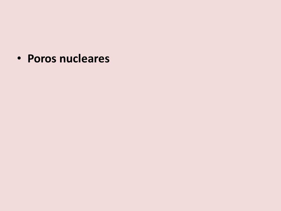 Poros nucleares