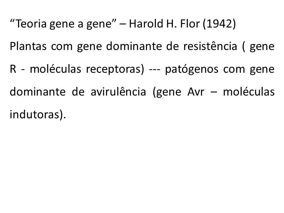 Teoria gene a gene – Harold H. Flor (1942)