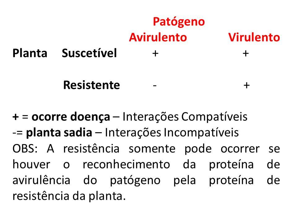 Patógeno Avirulento Virulento. Planta Suscetível + +