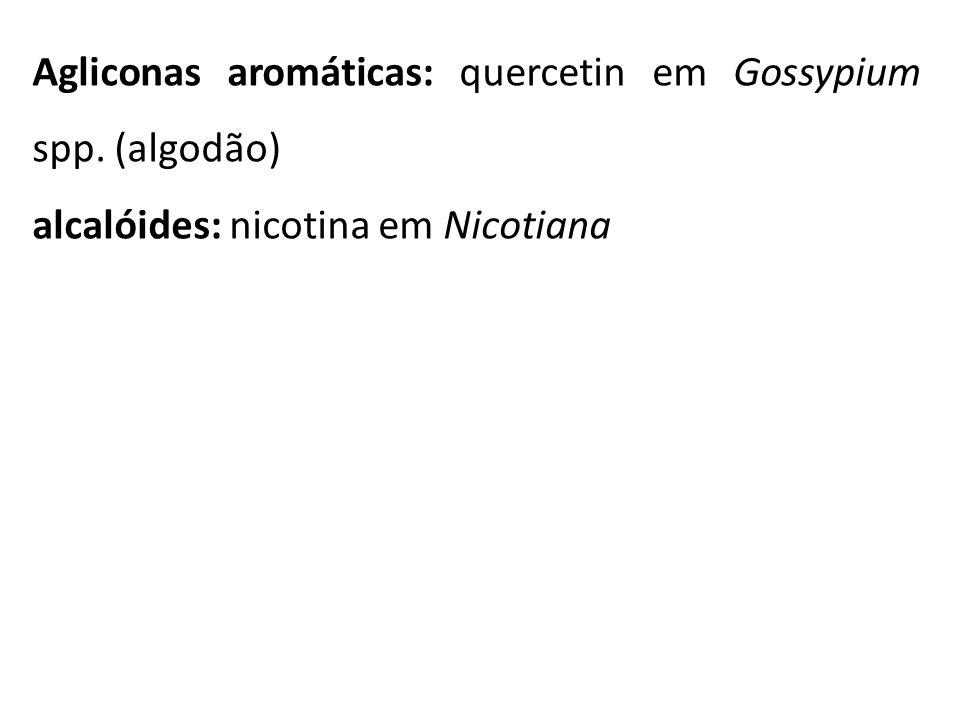 Agliconas aromáticas: quercetin em Gossypium spp. (algodão)