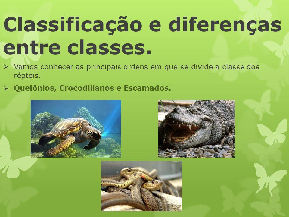 Classificação e diferenças entre classes.