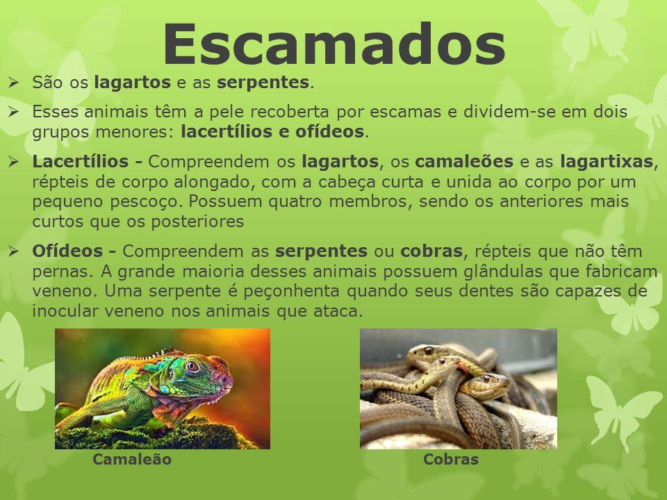 Escamados São os lagartos e as serpentes.