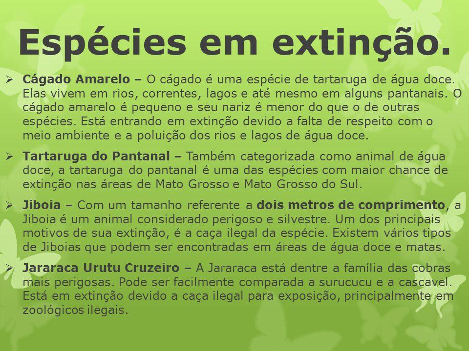 Espécies em extinção.