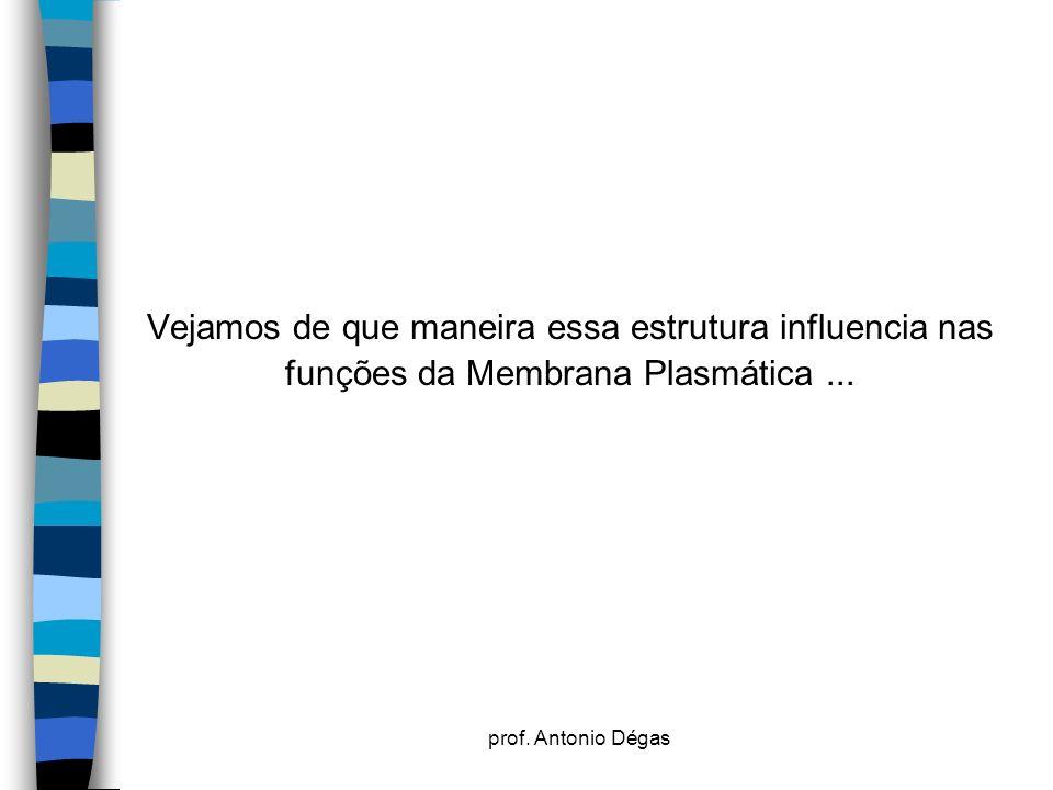 Vejamos de que maneira essa estrutura influencia nas funções da Membrana Plasmática ...