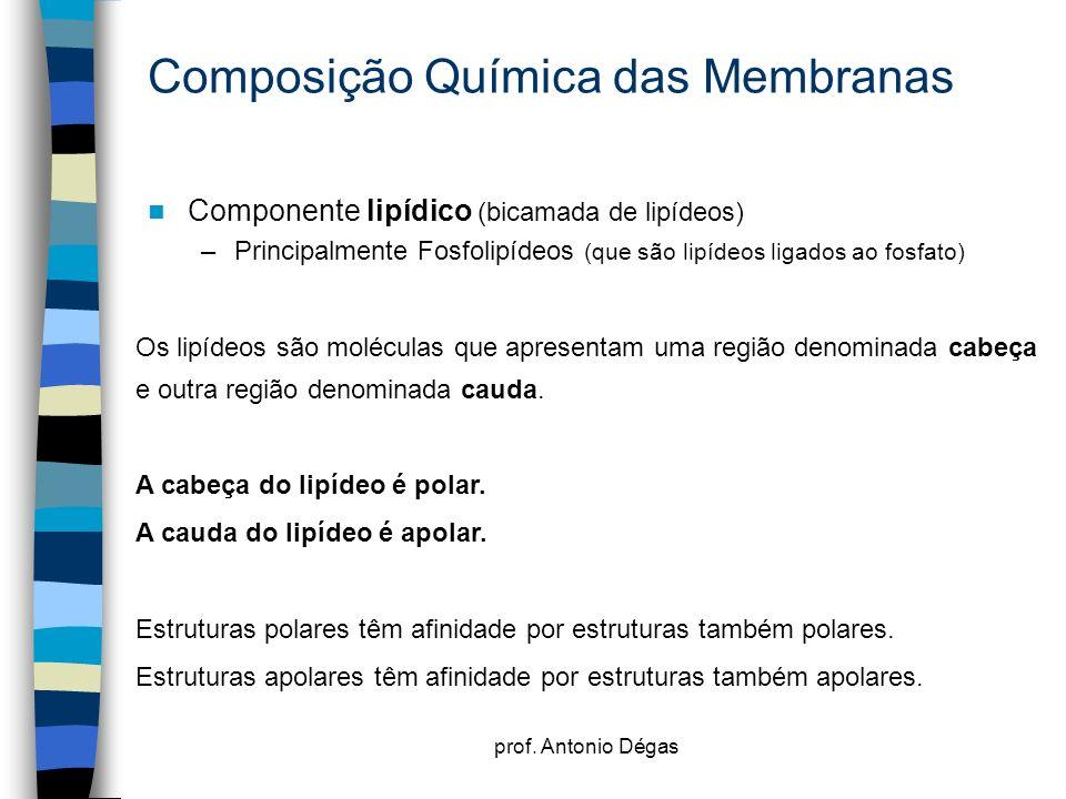 Composição Química das Membranas