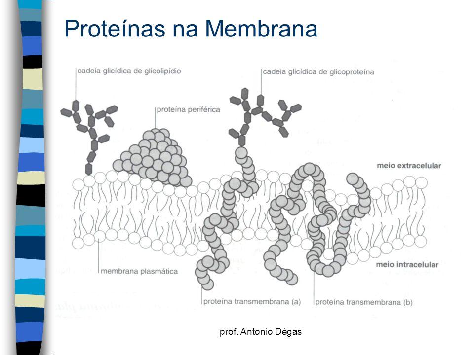 Proteínas na Membrana prof. Antonio Dégas
