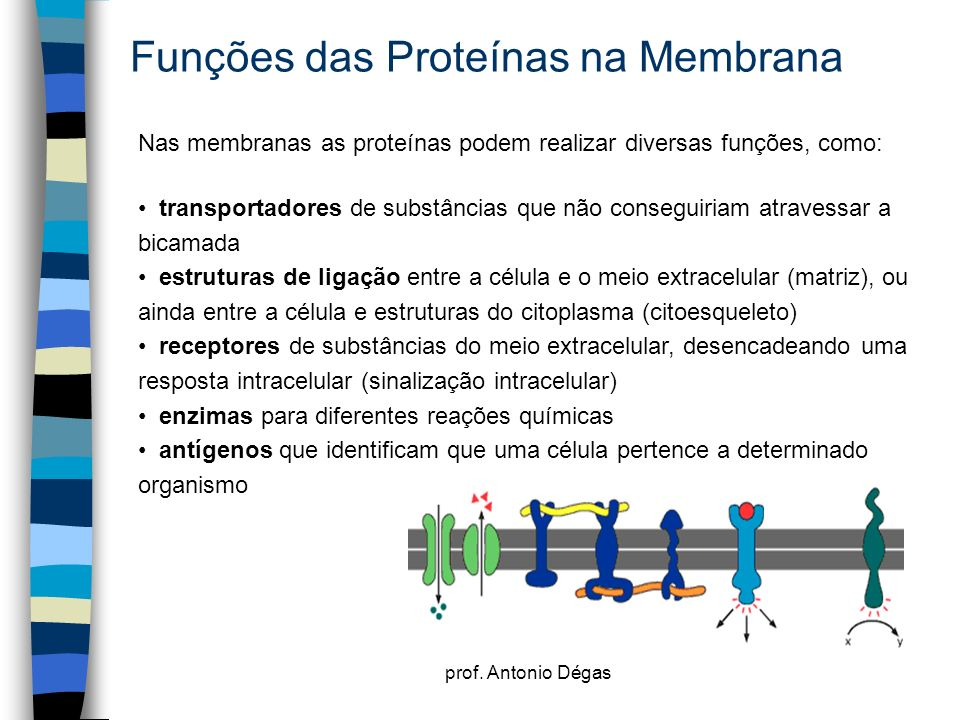 Funções das Proteínas na Membrana