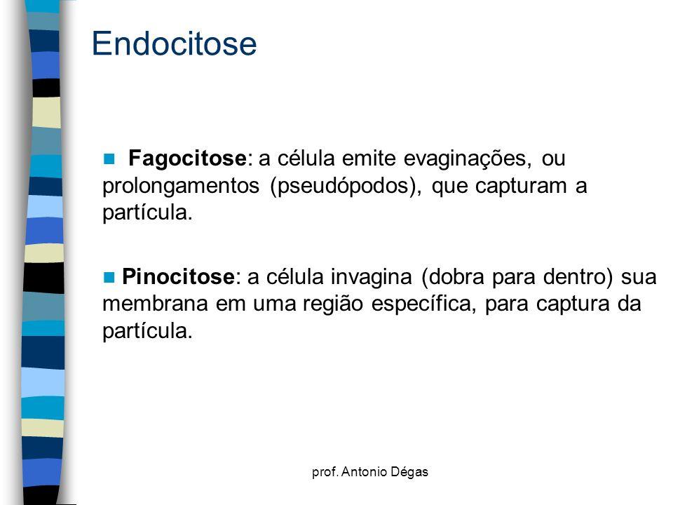 Endocitose Fagocitose: a célula emite evaginações, ou prolongamentos (pseudópodos), que capturam a partícula.
