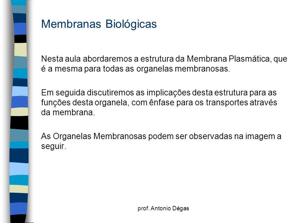 Membranas BiológicasNesta aula abordaremos a estrutura da Membrana Plasmática, que é a mesma para todas as organelas membranosas.