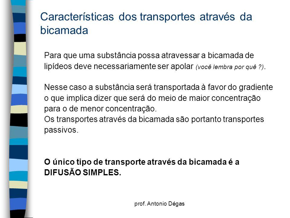 Características dos transportes através da bicamada