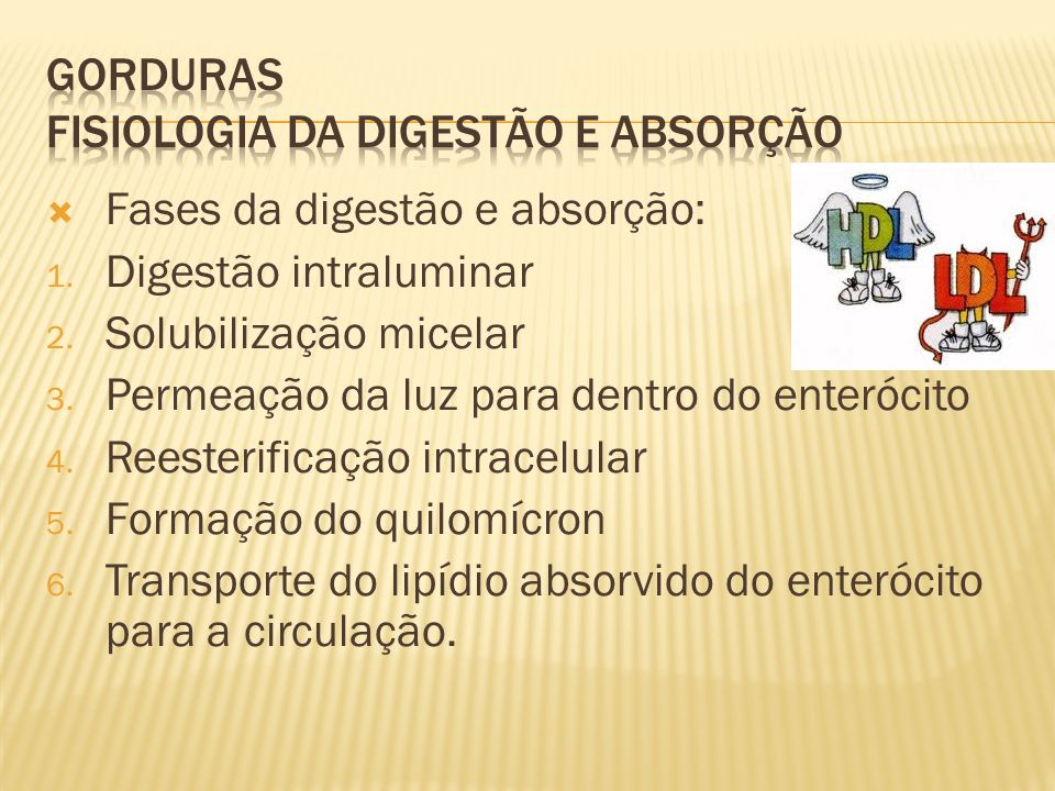 GORDURAS Fisiologia da digestão e absorção