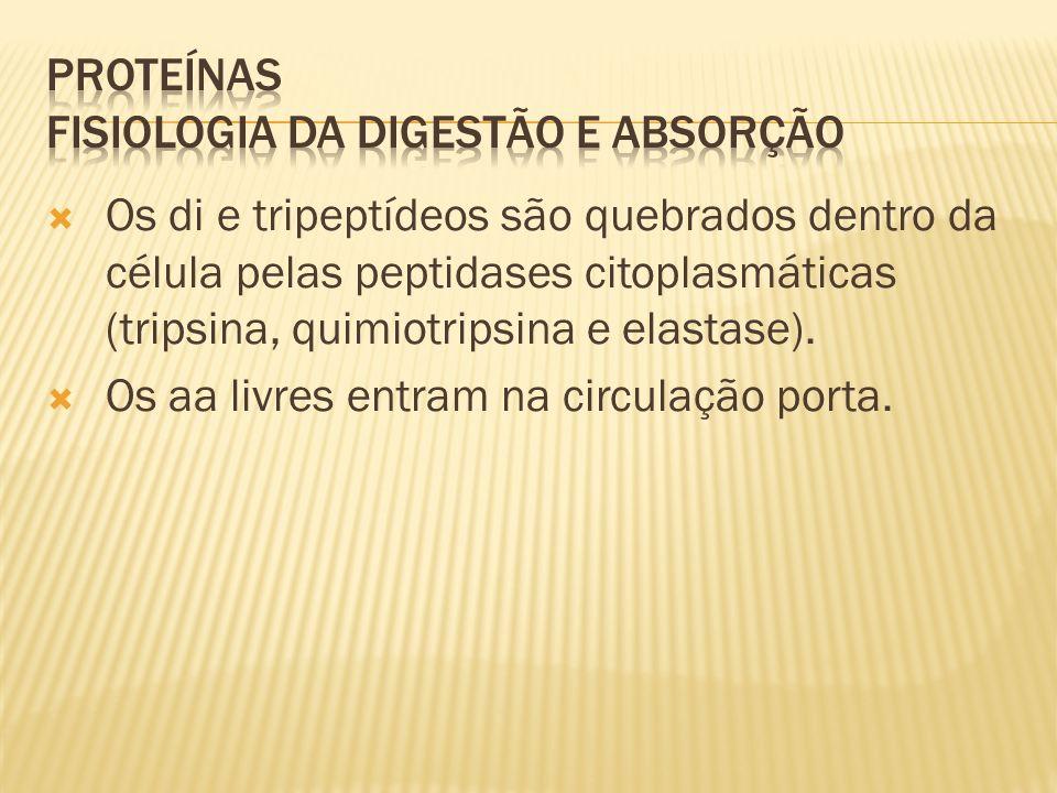 PROTEÍNAS Fisiologia da digestão e absorção