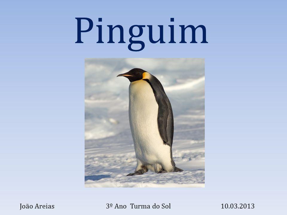 Pinguim João Areias 3º Ano Turma do Sol 10.03.2013