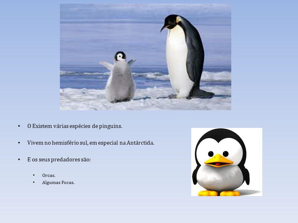 O Existem várias espécies de pinguins.