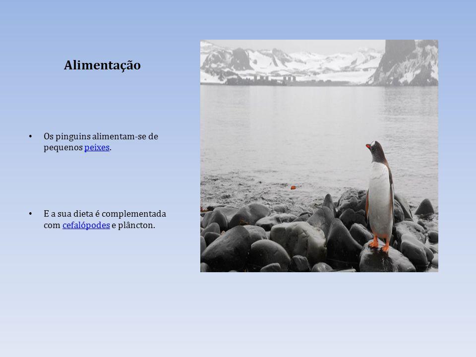 Alimentação Os pinguins alimentam-se de pequenos peixes.